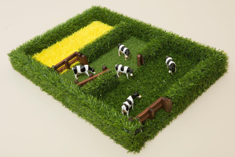 The Field Paddocks
